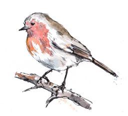watercolour-robin