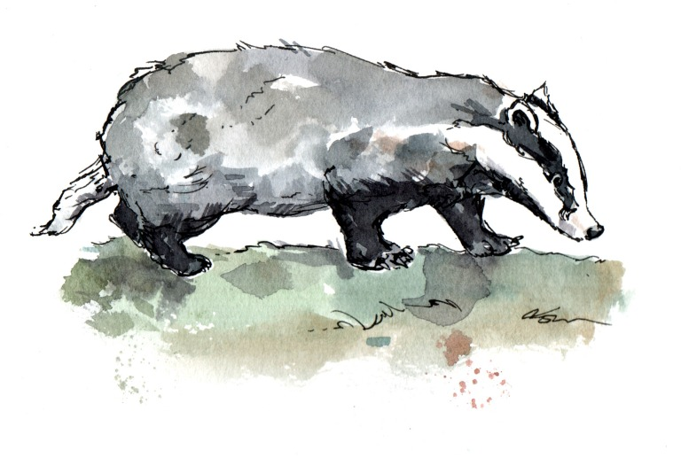 badger-card