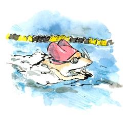 swimming-steve