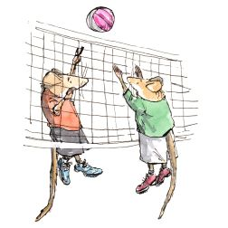 volleyball-steve