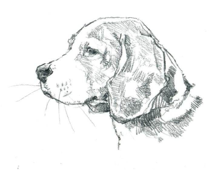 beagle 001