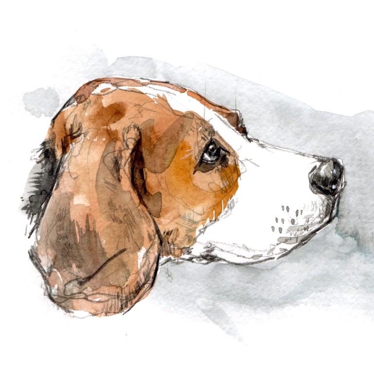 beagle two 0011