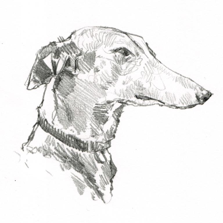 greyhound 001