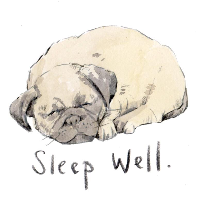 pug sleeping 001