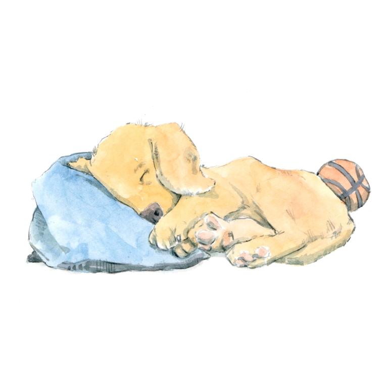 puppy sleeping 001