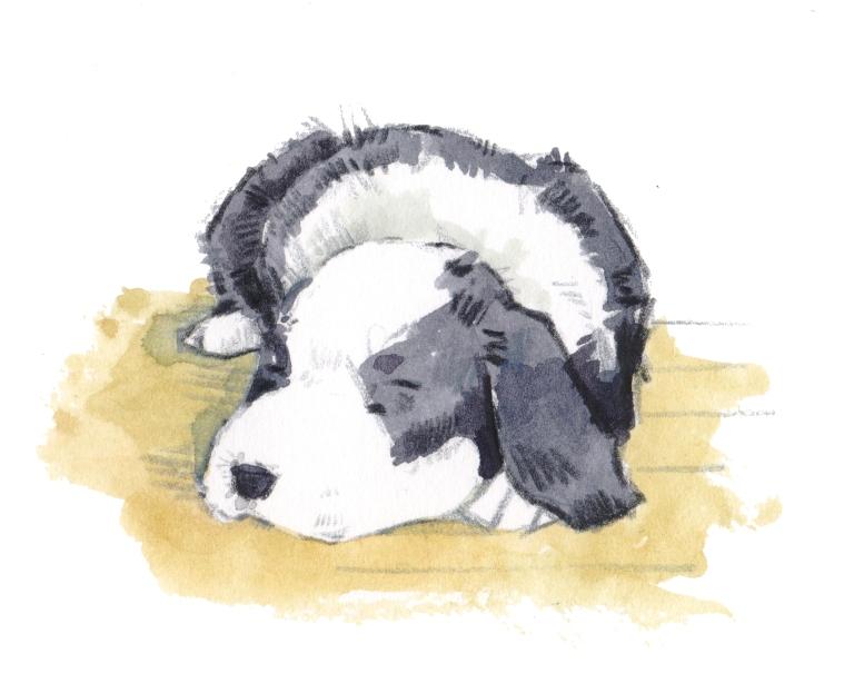 sleeping collie 001