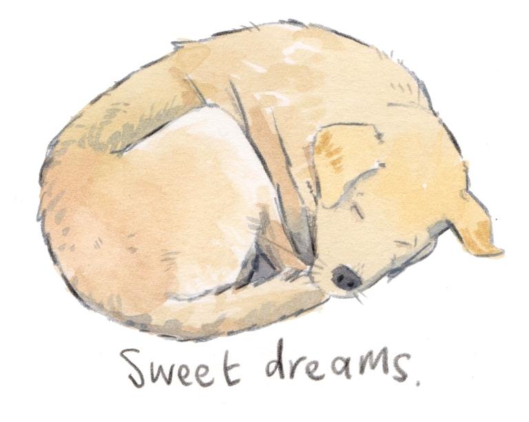 sleeping dog 001.jpg