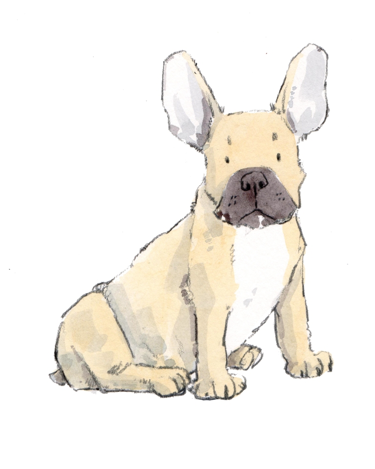 frenchie 8 x 10 300 dpi