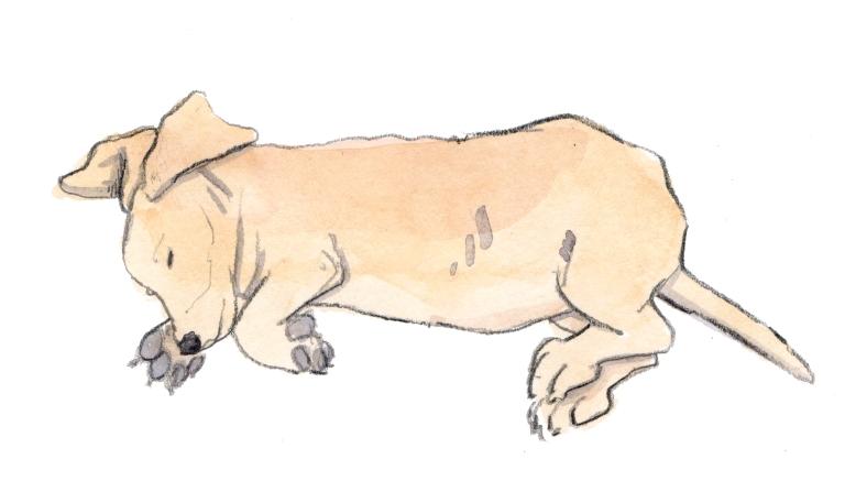 leeping dog 001