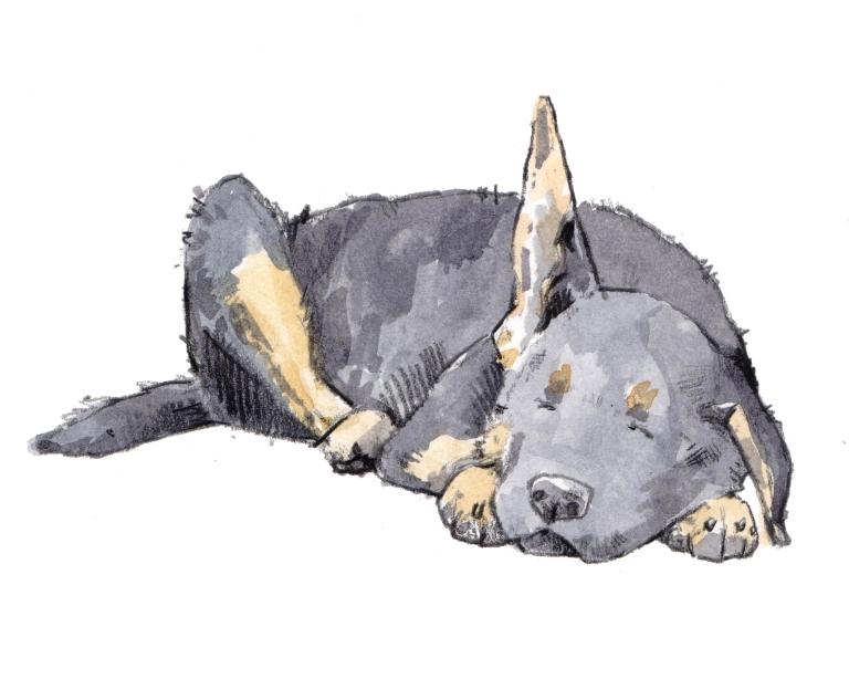 puppy sleeping 003