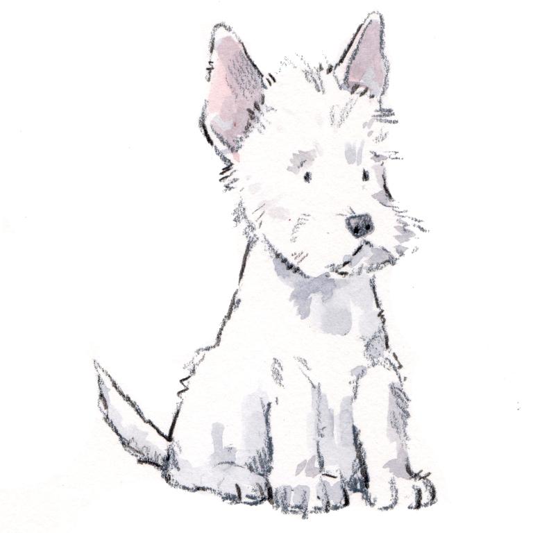 westie puppy 001