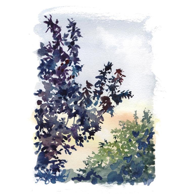 garden view 021