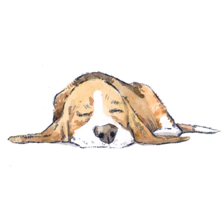 puppy sleeping 004