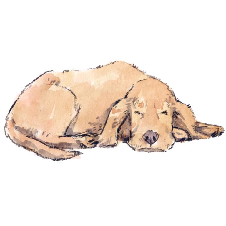 sleeping dog 002