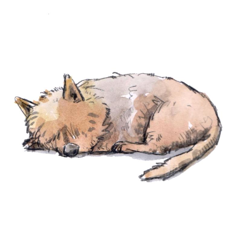 sleeping dog 003