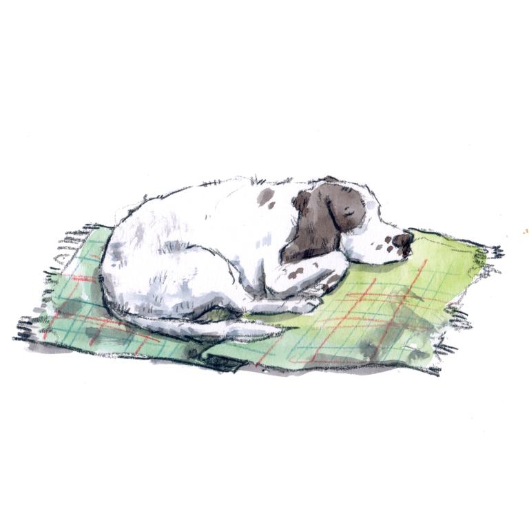 sleeping dog 004