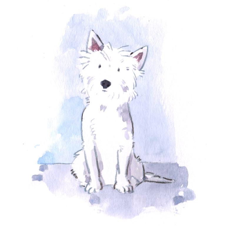 dog 012