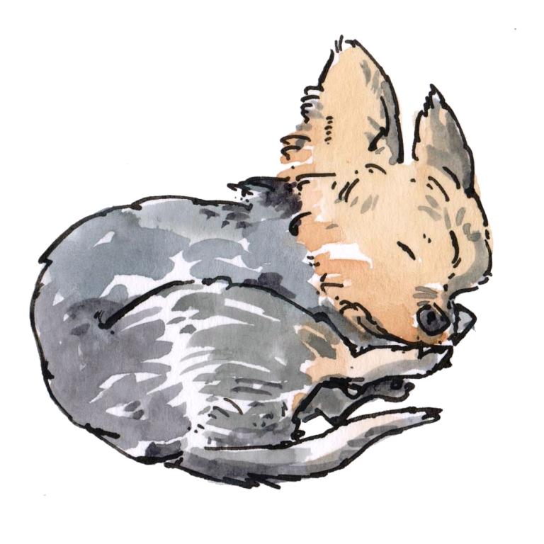 dog 015