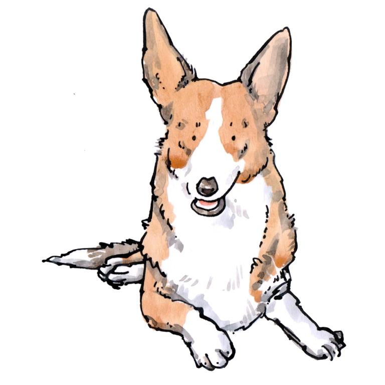 dog 016