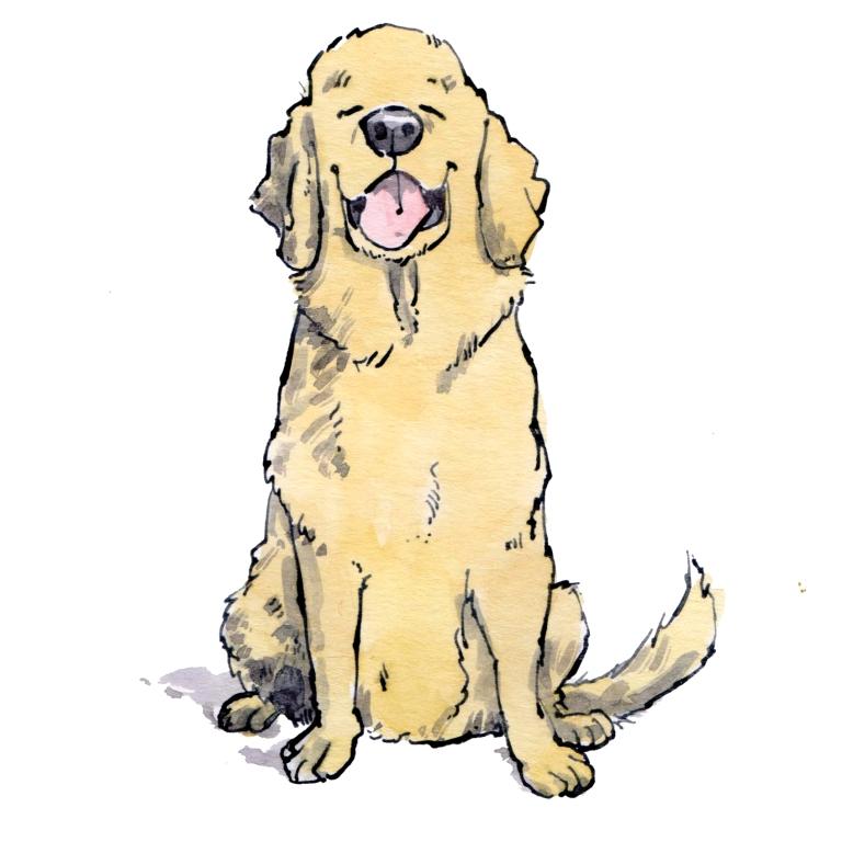 dog 022