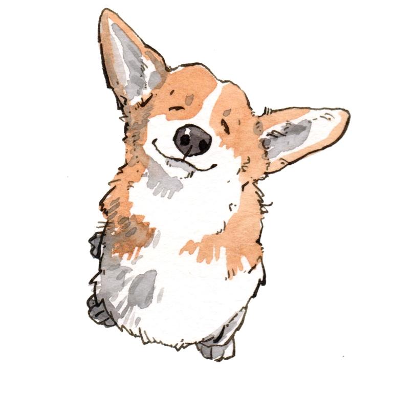 dog 035