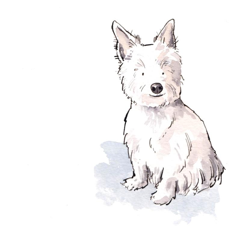 dog 036
