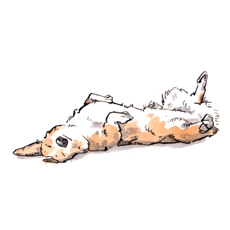 dog 039
