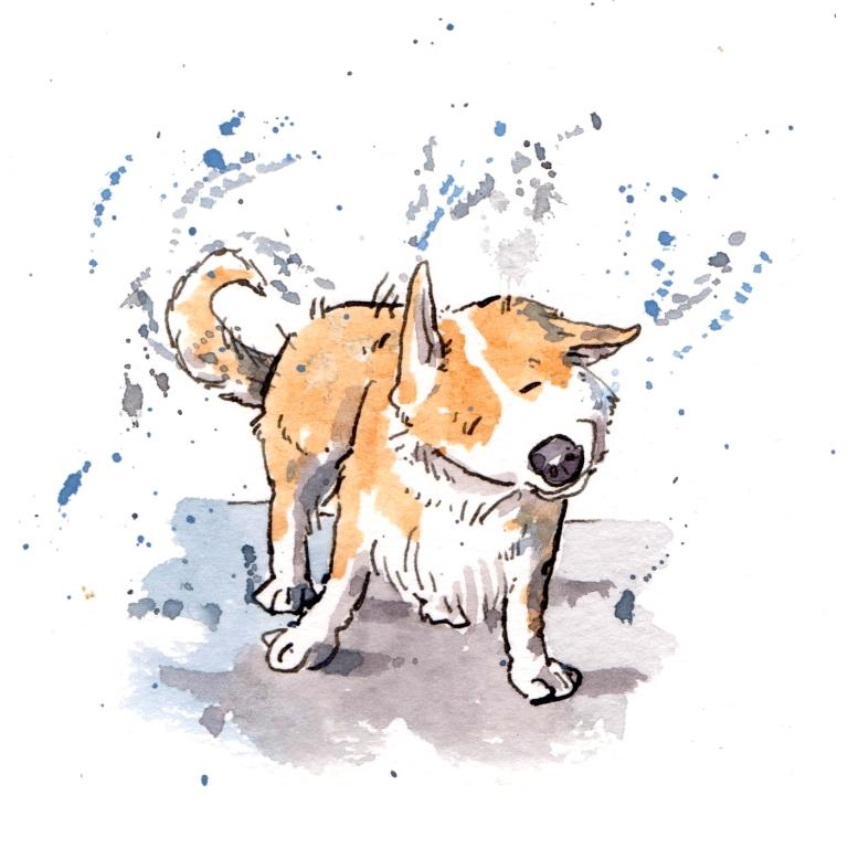 dog 042