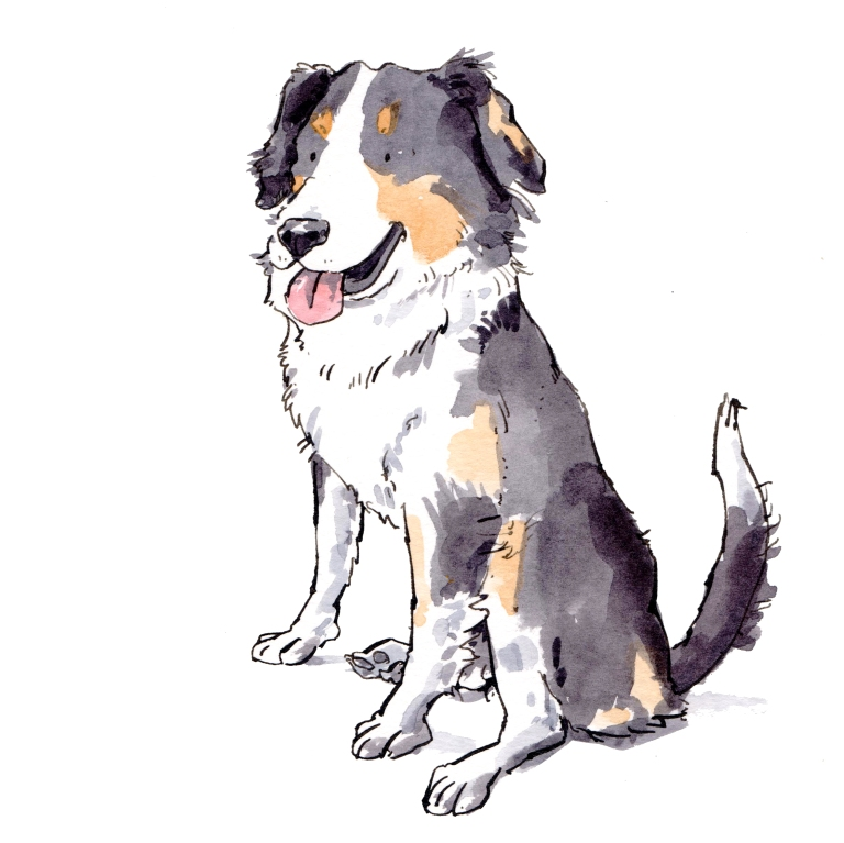 dog 043