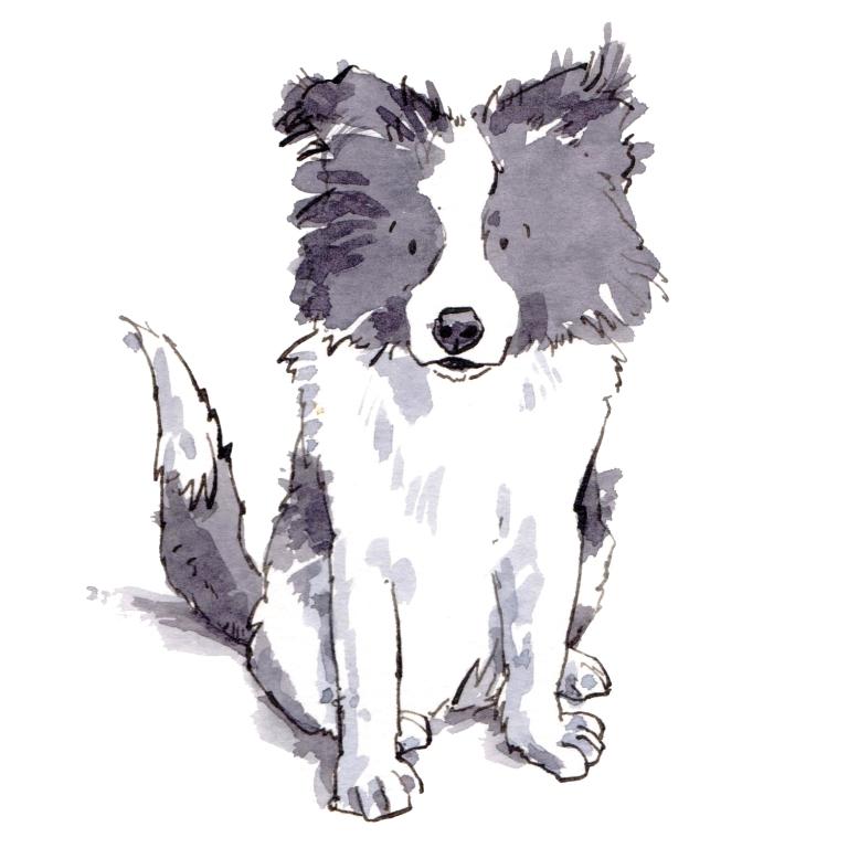 dog 045