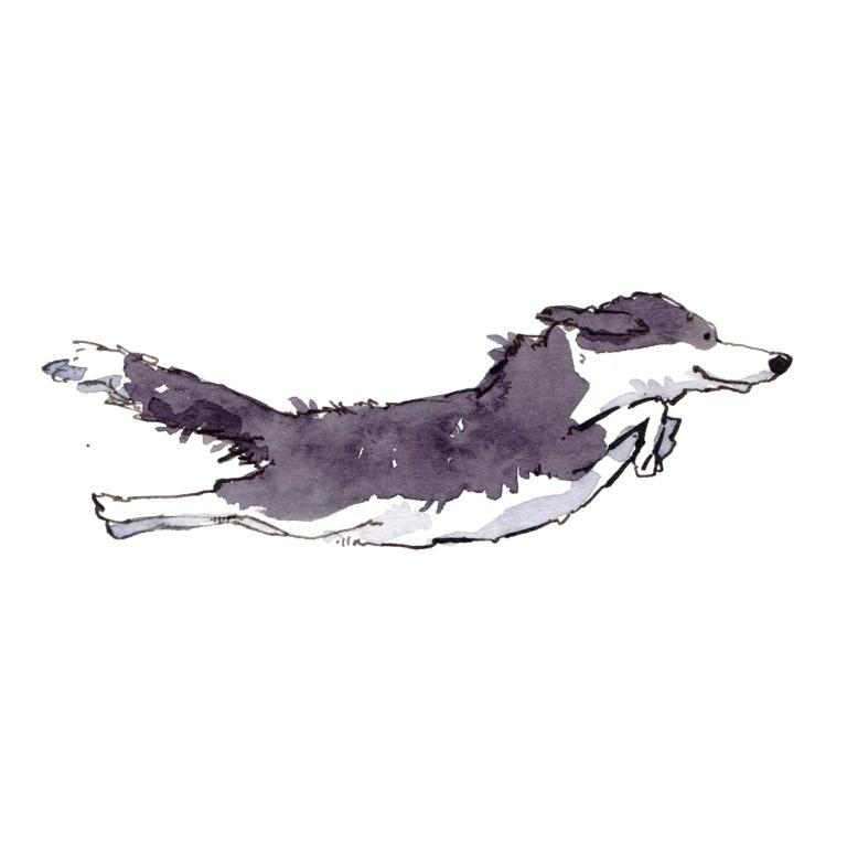 dog 047