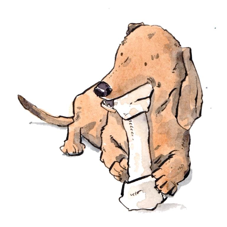 dog 056