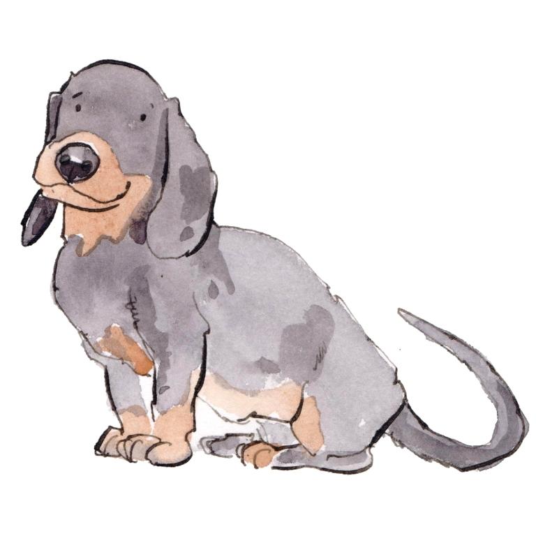 dog 057