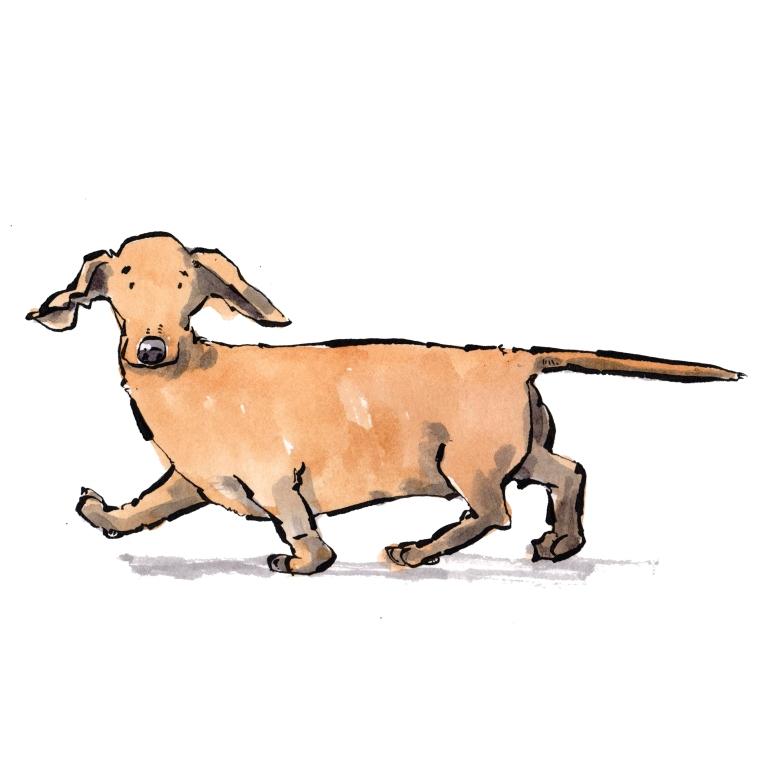 dog 060