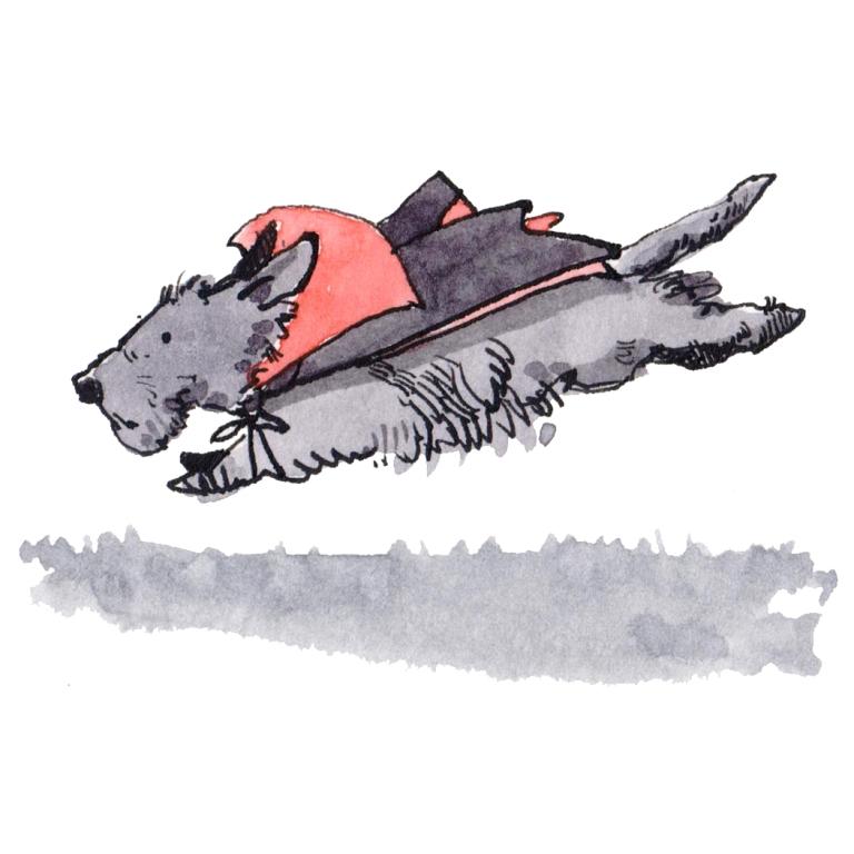 dog 068