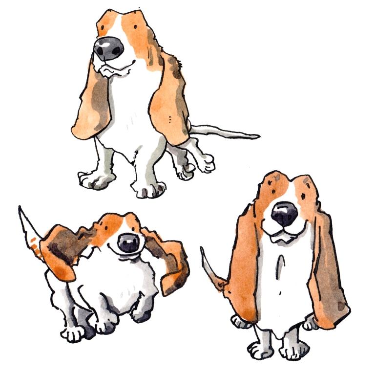dog 070