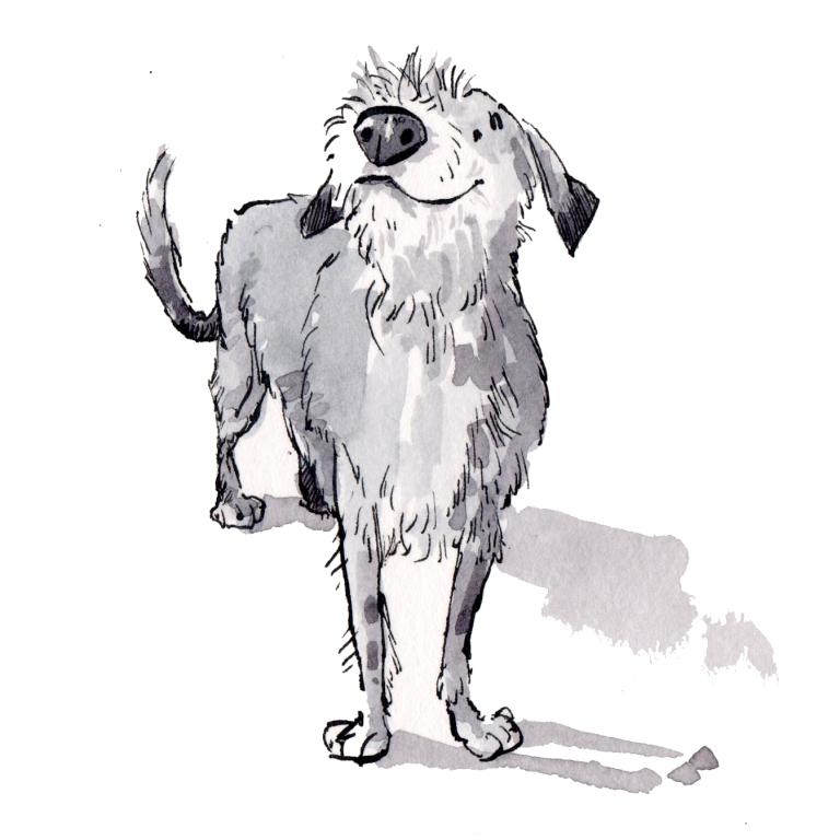 dog 073
