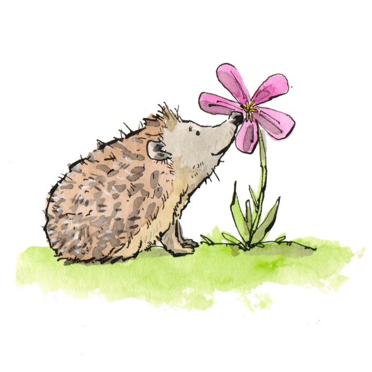 hedgehog 009