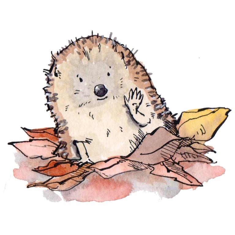 hedgehog 010