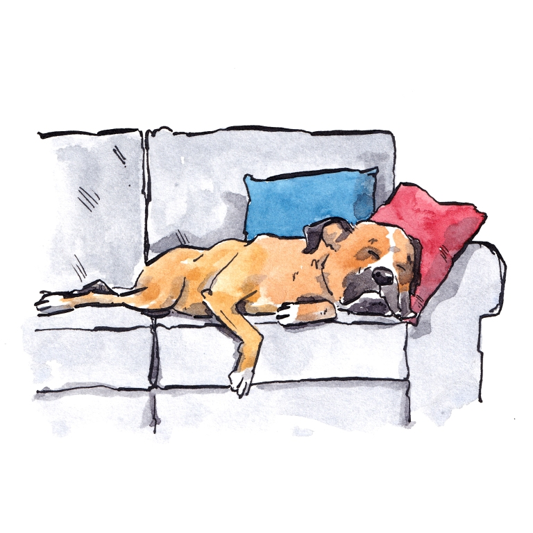 dog_20190109_0001
