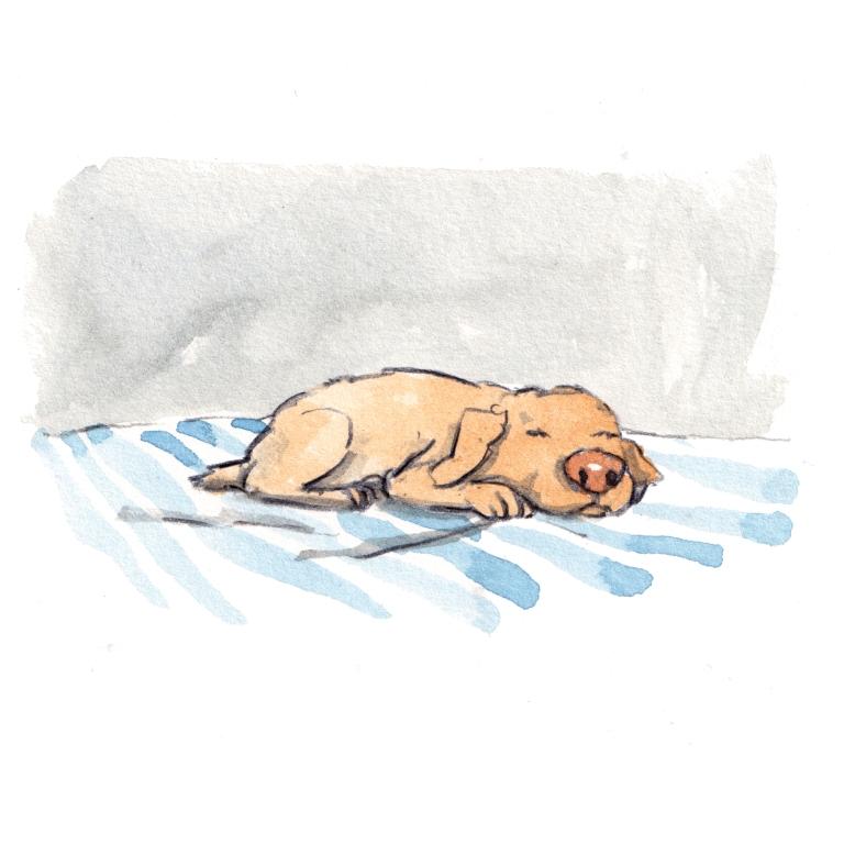 dog_20190211_0002