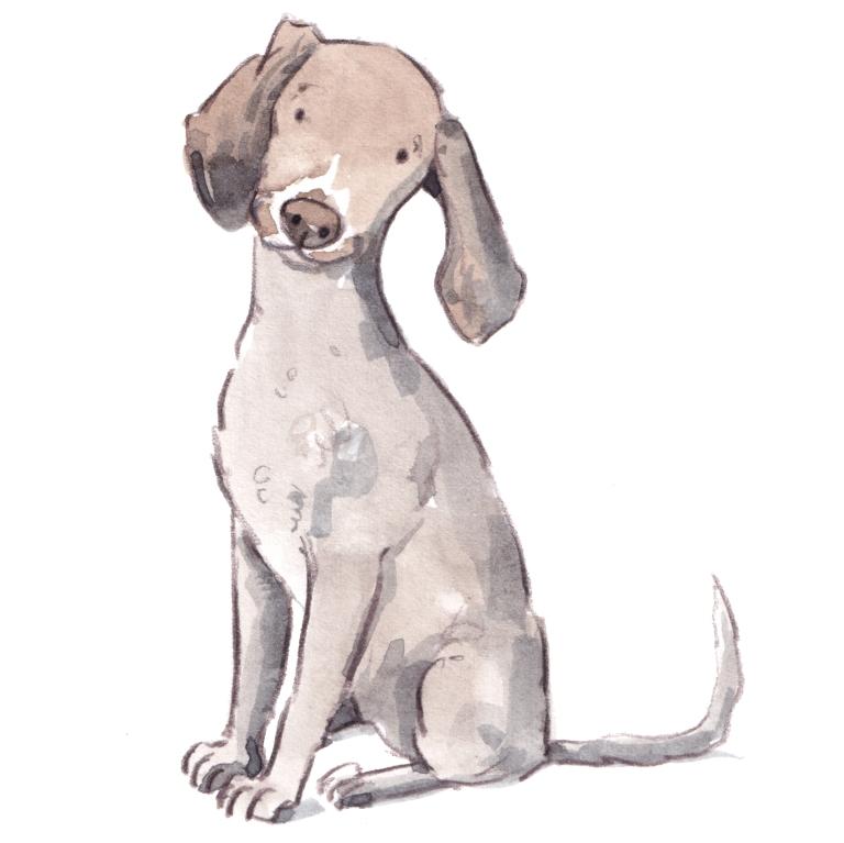 dog_20190220_0002