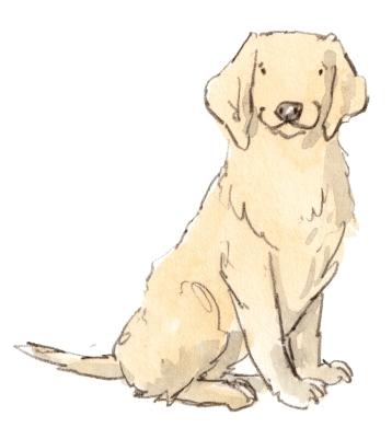 dog_20190224_00011