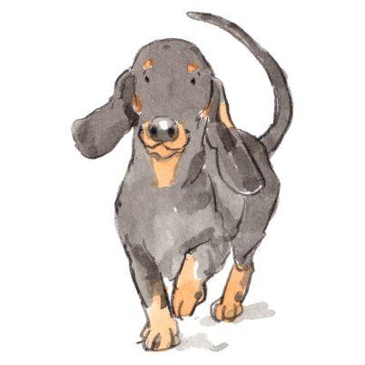 dog_20190224_000111