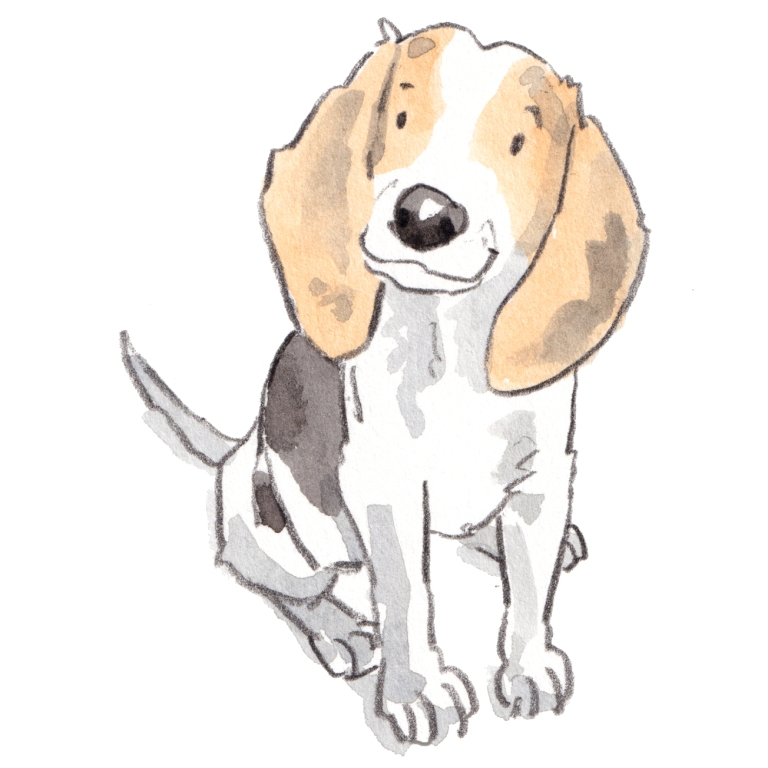 dog_20190224_0001111