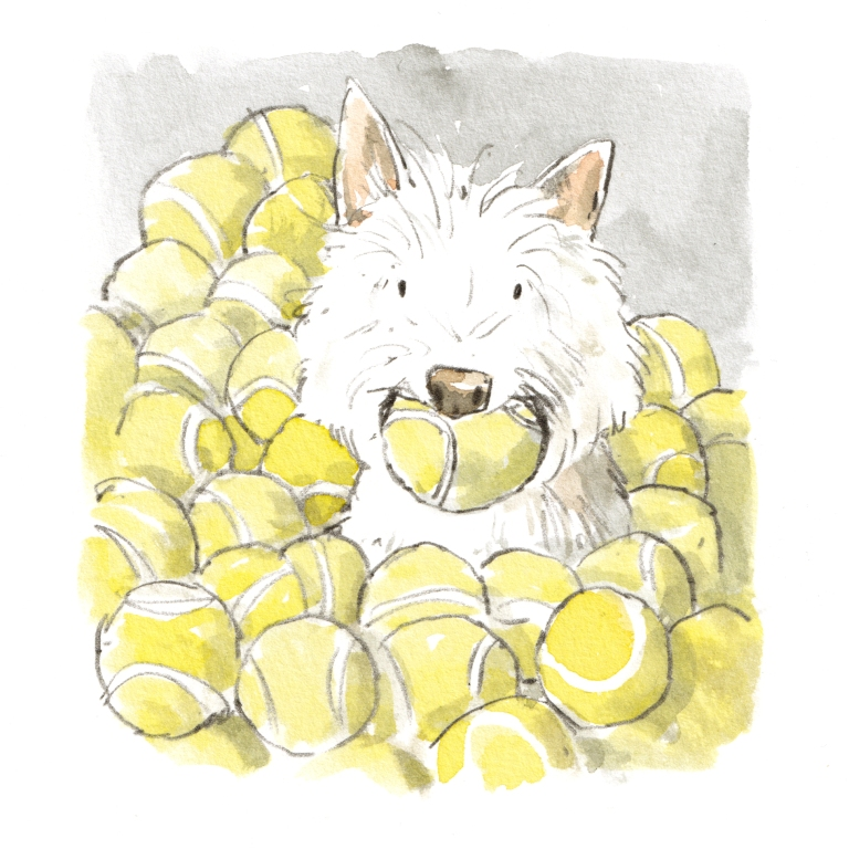 West highland terrier with a mountain of tennis balls illustration