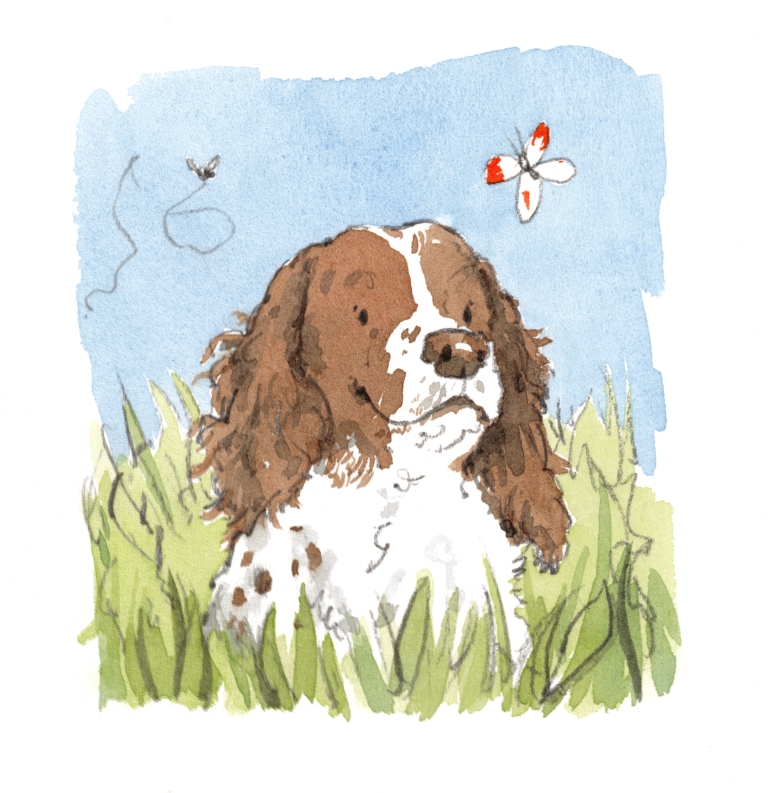 Spaniel in a field with butterfly and bee illustration