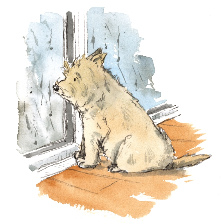 Cain terrier looking sad, looking at rain through the window illustration