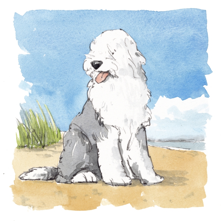 Old English Sheep dog at the beach illustration