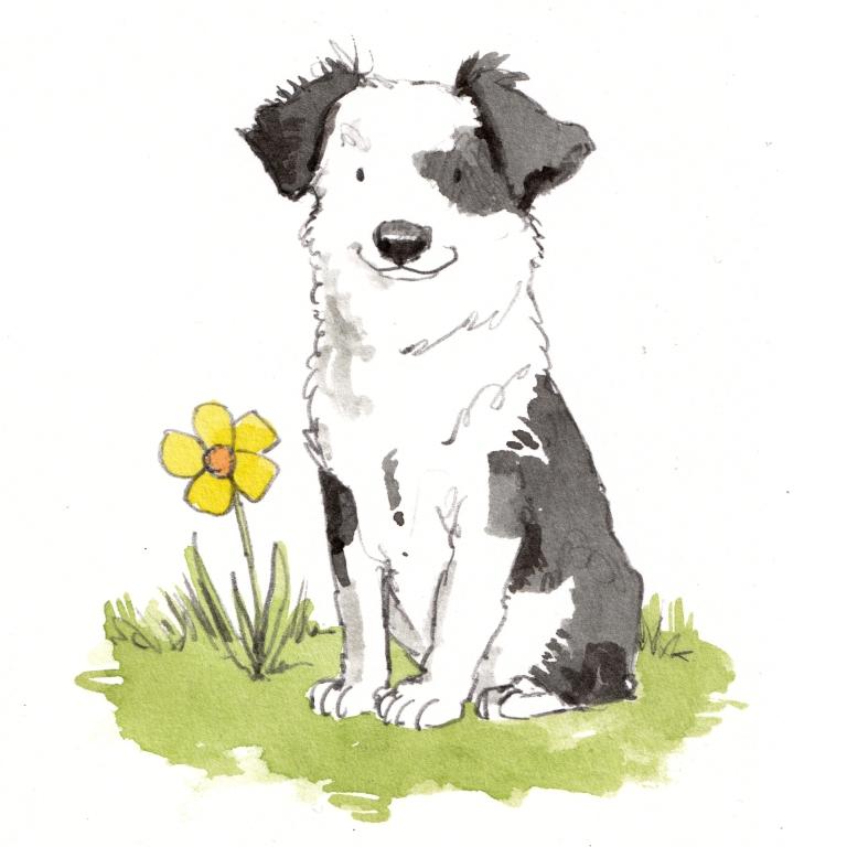 dog_20190619_0003